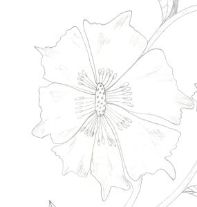 Design 11 - Copy (2)