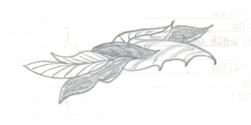 Design1.6